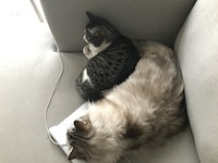 two cats lying on a couch on top of a laptop